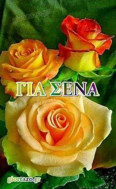 Κάρτες Αγάπης Για Σένα Σ'Αγαπώ Πολύ - Giortazo.gr Rose, Flowers, Plants, Pink, Plant, Roses, Royal Icing Flowers, Flower, Florals