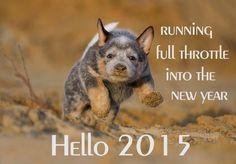 Calender for 2015