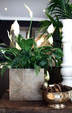 New Paper Tar Bag w/ Spathiphyllum and Srilankan Polished Brass Bowl and marble candlestick #sphathiphyllum #pots #marble #Brass #gardenlife #design