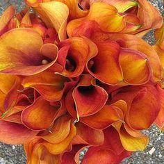 Orange wedding flowers    Keywords: #orangeweddings #jevelweddingplanning Follow Us: www.jevelweddingplanning.com  www.facebook.com/jevelweddingplanning/