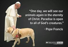 En el Cielo hay un lugar para nuestras mascotas.