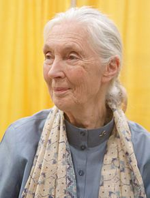 """Jane Goodall: """"I think if I had been male, I wouldn't have been pushing these anthropomorphic ideas. I was told I shouldn't have given the chimps names, that it is more scientific to number them, and that you shouldn't talk about their personalities, their minds, or their feelings because those are attributes of our own species. Fortunately, I was able to think back to the wonderful teacher I had as a child who taught me that animals do have personalities, minds, and feelings, and that was…"""
