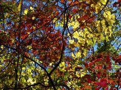 fall weather raiment