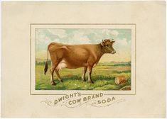 Beautiful Vintage Cow in Pasture Ad Graphic!