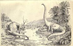 Diplodocus   ...