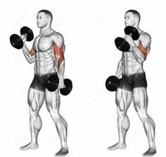 Best Dumbbell Exercises For Biceps Fitness Workouts, Weight Training Workouts, Gym Workout Tips, Sport Fitness, Muscle Fitness, Fun Workouts, Training Exercises, Dumbbell Bicep Workout, Best Dumbbell Exercises