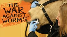 New targeted deworming strategies are designed to keep your horse healthy, and…