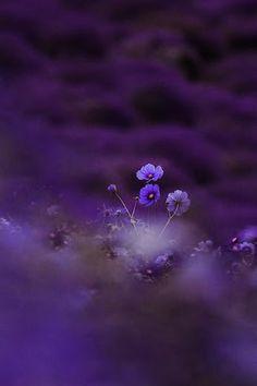 All shades of purple / Freya's photo. Purple Love, Purple Lilac, All Things Purple, Shades Of Purple, Deep Purple, Purple Flowers, Purple Stuff, Mont Fuji, Color Lila