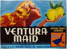 VENTURA MAID Vintage Montalvo Lemon Crate Label   Striking vintage commercial art