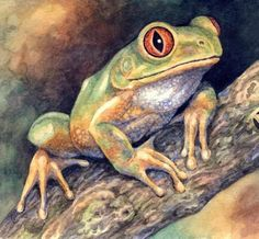 Forest Tree Frog Willem Watercolor// this guys stick to our windows and eat bugs that come to the windows attacked by the evening lights on in the house