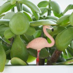 Cute flamingo by @freitag_frei
