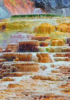 Yellowstone Park - went there a couple of times as a kid & once (quickly) with my dh before our first child was born