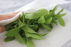 How to Freeze Mint Leaves (with Pictures) | eHow