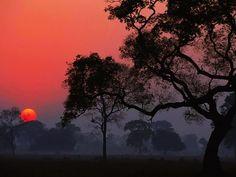 pôr do sol no Pantanal - Brazil