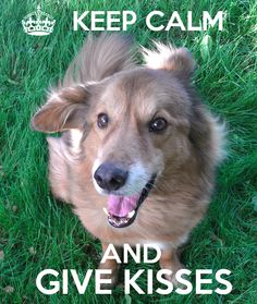 This doggie has the best advice EVER