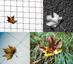 Series of four fine Autumn Leaf Art Photography di StegoPhotoStore, €7.00