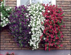 red white & blue window box planter | ... Is More Beautiful With Plants In Window Boxes | www.coolgarden.me