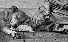 real life - photo by Gabrielby Gulsah inspiration Animal Photography, Street Photography, White Photography, Children Photography, I Love Dogs, Puppy Love, Animals Beautiful, Cute Animals, Homeless People
