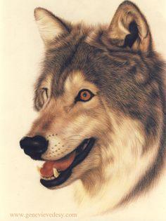 Wolf Art Print Wildlife art print of a wolf drawing by Matan
