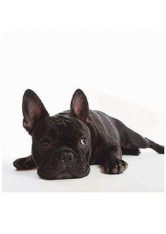 Das Glasbild »Bulldogge«, ist ein moderner Blickfang, der Sie begeistern wird! Das Bulldoggen-Motiv ist stillvoll und trendig zugleich. Durch das hochwertige Digital-Fine-Art-Print-Verfahren wird eine harmonische Verbindung zwischen Glas, Licht und Farben geschaffen und die Verwendung erstklassiger Druckfarben auf Float-Glas sorgt für eine strahlende und langlebige Farbbrillanz.