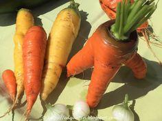 Kennst du die Karottenraupe? Carrots, Vegetables, Food, Caterpillar, Carrot, Vegetable Recipes, Eten, Veggie Food, Meals