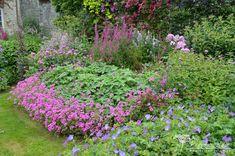 kakost - Hledat Googlem Colourful Garden, Plants, Color, Colour, Plant, Planets, Colors