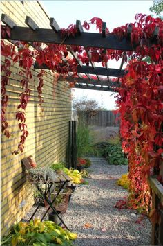 Tokiga sweets and ideas: 3 times pergola . Though early inside notion, this pergola has