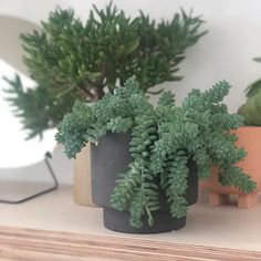 "Sekki Pot from Skandivis.co.uk  ""I remember the first time it was cool to have houseplants. Not lots of them but a chosen few - like the ""Domestic Peace"" plant (husfred ☺️)…"""