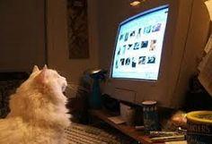 Resultado de imagen para gatos en computadoras