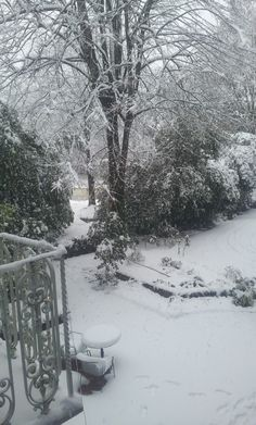 Our garden under the snow!  www.locandalelisa.it