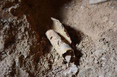 Nova caverna que continha Manuscritos do Mar Morto é descoberta em Israel