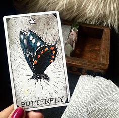 undergoing great change and transformation | #butterflyspirit from the wild unknown animal spirit via @sarahtams