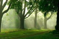 Misty morning - Tapetit / tapetti - Photowall