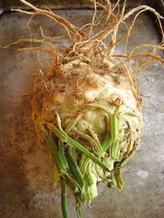 10 things to do with Celery Root via Susie Middleton
