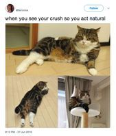 All pets are created equally, but some memes are funnier than others.,Funny, Funny Categories Fuunyy All pets are created equally, but some memes are funnier than others. Source by erium. Cat And Dog Memes, Funny Cats And Dogs, Funny Animal Memes, Cute Funny Animals, Cats And Kittens, Cute Cats, Funny Memes, Pet Memes, Funniest Memes