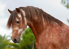 thehorselifestyle:  http://www.stephaniemoonphoto.com/horses/portrait/