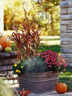 {Fall Container Gardens} Ornamental grasses bring handsome height to a metal laundry tub. 'Burgundy Giant' red fountaingrass provides a rusty backdrop for dark pink, daisylike 'Cecilia' chrysanthemum and cheerful Sundaze Golden Yellow strawflower. Petite blue fescue adds texture at the front of the vintage container.