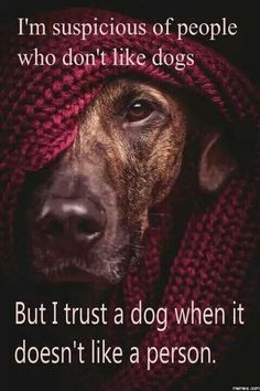 Love this.  Very true..... unless it's a Chihuahua. ..... mine only likes me.