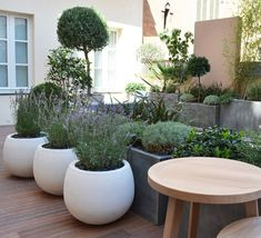 White containers; planting ideas russian sage, lavender or salvia.