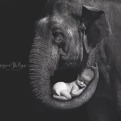 Digital Backdrop - prop for newborn photography Elephant Photography, Newborn Photography Props, Underwater Photography, Kids Saddle, Elephant Quotes, Digital Backdrops, Paintings I Love, Mother Quotes, Pictures To Draw