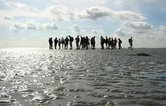 Wadlopen; North Sea, NL