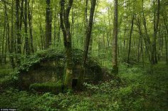 Secrets of the forest: There are other reminders of the war hidden in the forest, like this German bunker, in an area where they had a hospital, rail connections and a command post during the battle of Verdun.