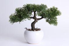 Cedern-Bonsai in weißem Keramikgefäß - Online - Shop für Kunstpflanzen, Kunstblumen, Deko-Obst & Gemüse