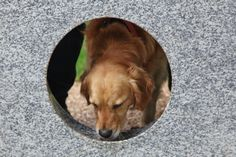 Dog drinking from Watering Holes drinking fountain by Robin  Monotti Architects & Mark Titman