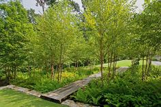A lush underplanting of ferns and other native plants surrounds the walkway between two of the lawn terraces that serve as flexible play areas for the grandchildren.