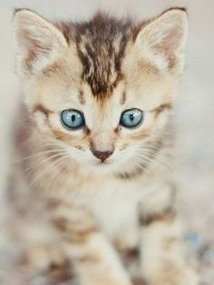 #pics #cuteanimalspics #cute #animals