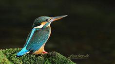 Lovely_bird-
