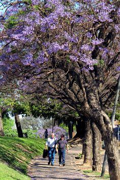 Parque España, #Rosario #Argentina