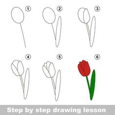 Find Step By Step Drawing Tutorial Vector stock images in HD and millions of other royalty-free stock photos, illustrations and vectors in the Shutterstock collection. Thousands of new, high-quality pictures added every day. Pencil Art Drawings, Doodle Drawings, Doodle Art, Flower Step By Step, Step By Step Drawing, How To Draw Flowers Step By Step, Easy Drawings For Kids, Art For Kids, Tulip Drawing