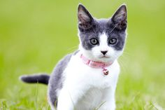 Natural flea collars can protect dogs and cats from fleas in a less toxic way. Here's how to make a natural flea remedy for your pet.